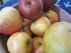 apples, pear & mango